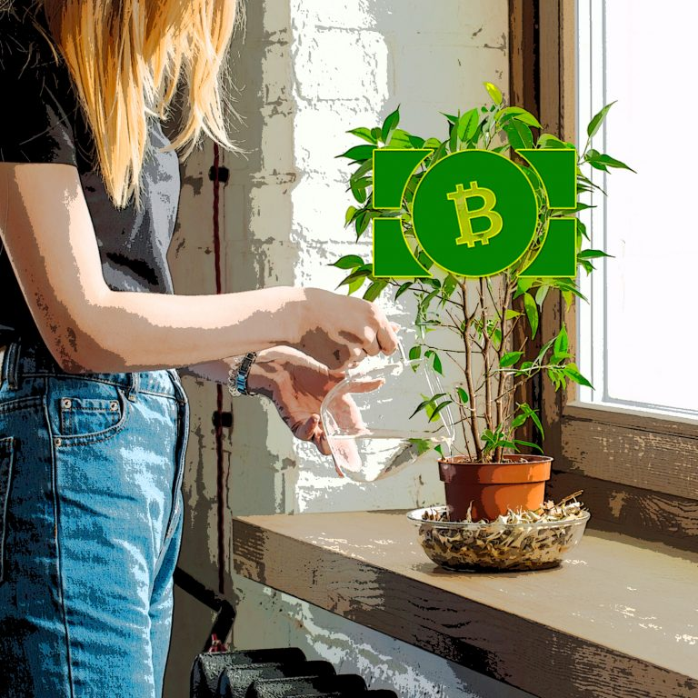 Spring Sees Bitcoin Cash Adoption Rise