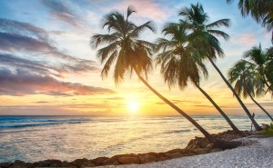Overstock Invests $4 Million in Barbados Bitcoin Startup